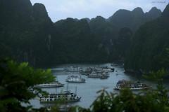 Bird's eye view of Halong bay (Anil Kothapalli) Tags: nature unesco vietnam naturalwonders halongbay worldheritagesites