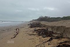Erosione della spiaggia in prossimità della pineta di Jesolo