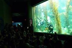 BAS Comic Con Dive Show_8