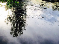 Reflections of June (f l a m i n g o) Tags: