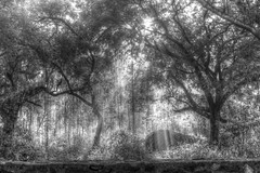 Morning walk in the Grove at ECR Raod - #22102014-IMG_7617_8_9_BW (photographic Collection) Tags: road morning trees blackandwhite sun india white black color wall sunrise canon project photography team photographer grove oct photographic collection rays 365 chennai hdr tamilnadu ecr 22nd 2014 hws sarma photomatix ecrroad project365 550d kalluri t2i hyderabadweekendshoots injambakkam canon550d teamhws canont2i photographiccollection bheemeswara bkalluri bheemeswarasarmakalluri