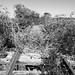 Missouri-Pacific Railway Trestle over Salt Bayou 1410251333bw