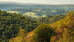 Above the trees (Keith in Exeter) Tags: autumn trees landscape nationalpark valley dartmoor slope wooded