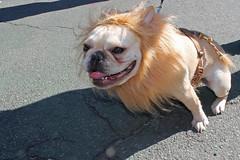 nyc newyorkcity dog eastvillage newyork photo foto image awesome snapshot picture photograph animale yorkville dogrun uppereastside howloween carlschurzpark halloweencostumes halloweendogs dogcostumes dogcostume halloweendog halloweendogparade costumeddog dogwearingclothes newyorkdogs halloweenhowl doginacostume decoratedanimal doghalloweencostumes halloweendogcostume canetravestito caneincostume halloweencostumesfordogs halloweendogcostumecontest doginahalloweencostume carlschurzparkhalloweendogparade carlschurzparkhalloweendogparade2014 carlschurzparkhalloweenhowl2014