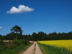 Once upon a time was the summer! (Axiraa - back very soon) Tags: road blue summer tree field yellow estonia rape tartumaa vanagram
