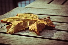 The lonely leaf (Nghia Nguyen Photography) Tags: autumn nature leaf herfst natuur blad project50 twittographers