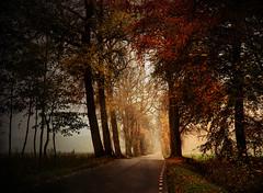 Life-giving Explored (BirgittaSjostedt) Tags: road autumn tree fall texture nature leaves fog haze foggy hazy alle ruly 881 abigfave daarklands magicunicornverybest birgittasjostedt