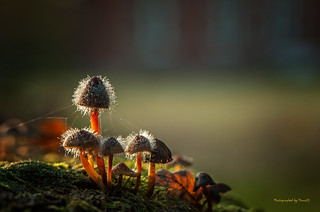 Pilze - Mushrooms - The time is gone . . .