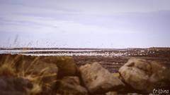 Birds (Crisbina) Tags: islanda reykjavík snow sea ocean neve ghiaccio ice panorama landscape natura nature fire fuoco acqua terra aria auroraboreale notherlights birds uccelli scogliera northerlighs