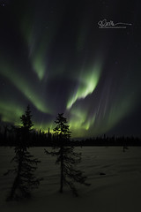 _64A1340 (Ed Boudreau) Tags: alaska northernlights auroraborealis nightphotography nightsky stars aurora winter winterscene winterscape landscape alaskalandscape landscapephotography auroratrapperscreek petersvillerd auroracolors