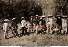 1931 - Robert Moore (22) (ngao5) Tags: adults autochrome clothing group hat headgear industry laboring males many men outdoors people ruralscenes sunhat traditionalclothing working