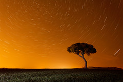 Lluvia ácida (Millán Martínez) Tags: circumpolar árbol nocturna fotografíanocturna contaminación lluviaácida