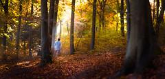 Autumn Selfie (Kiwi Tom) Tags: landscape portrait brenizer uk forest hiking trees autumn orange sun shadows adventure explore