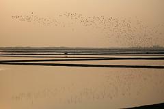 something murmured * Explored 16/03/17* (PawL23) Tags: petchaburi thailand reflection birds sunrise saltfields silhouette