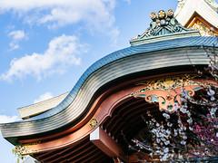 北野天滿宮 (Roa!) Tags: 日本 關西 京都 北野天滿宮 梅苑 梅花