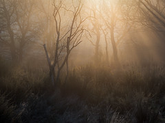 Clumber Park (Damian_Ward) Tags: damianwardphotography ©damianward damianward clumberpark nottinghamshire woodland mist frost morning rays