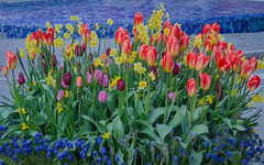 A flower installation in Helsingborg (frankmh) Tags: plant flower tulip daffodil helsingborg skåne sweden outdoor