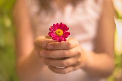 3/4 OFFRIR (Nathalie Le Bris) Tags: fleur flor flower main throughherlens