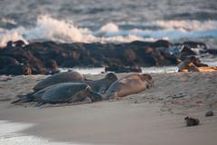 Poipu Beach Park (Kosen Ishikawa) Tags: kauai hawaii monkseal honu turtle