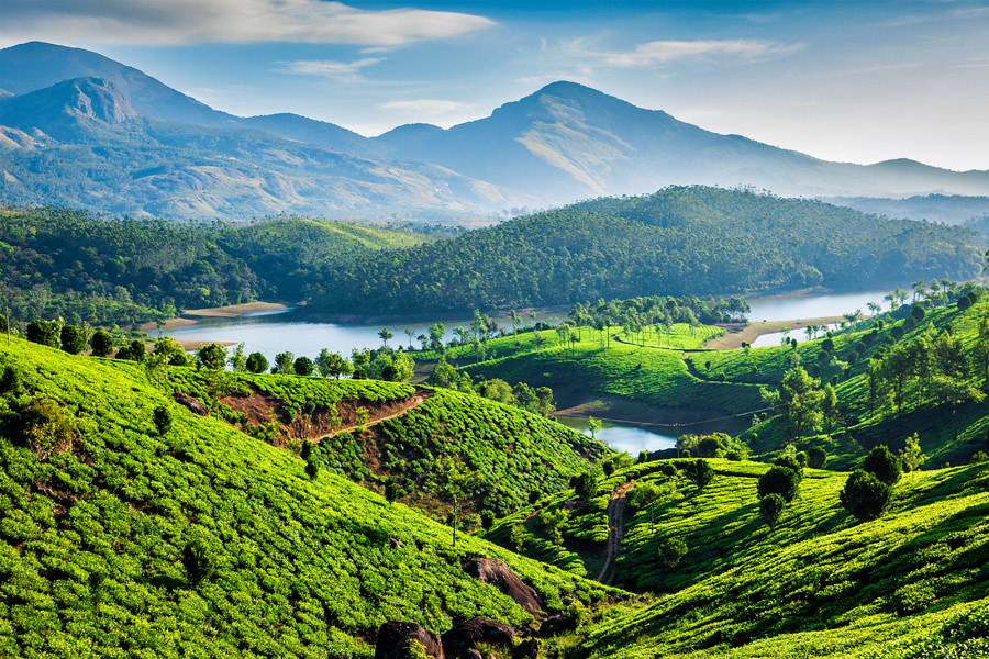 Tea plantations beside the river in Kerala India