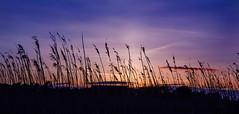 Sunset at Hengistbury Head (Ken Came) Tags: hengistburyhead dorset april kencame nikon d7000 sunset grass