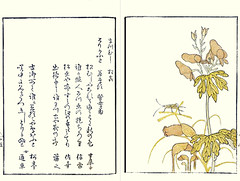 Monkshood, yellow bird's-nest and wire grass (Japanese Flower and Bird Art) Tags: flower monkshood aconitum chinense ranunculaceae yellow bird'snest monotopa hypopithys ericaceae wire grass eleusine indica poaceae ryusui katsuma ukiyo woodblock picture book japan japanese art readercollection
