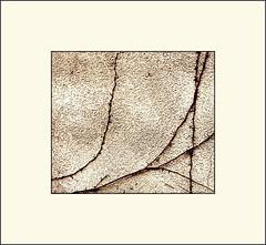 Wall (Bob R.L. Evans) Tags: stuccowall sepiatone vine minimalism simple unusual ipadphotography