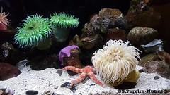 Canadian Museum of Nature, Ottawa, Canada (ssspnnn) Tags: lamer mar oceano ocean underthesea sea recife coral canadianmuseumofnature ottawa canada museum museu museo snunes nunes spnunes spereiranunes samsung galaxys7edge