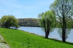 A springer day (Keinsei2) Tags: bord saône fleuve rivière river arbre verdure eau aqua water tree soleil ciel sky sun montmerlesursaône ain rhônealpes france fujifilm xa1 printemps springer spring