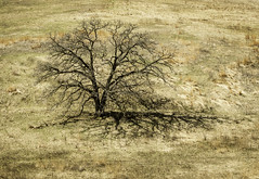 Emperor of the Oak Savannah (Sheila Newenham) Tags: wisconsin oak tree