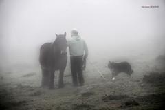 Susurrando a las yeguas (Jabi Artaraz) Tags: jabiartaraz jartaraz zb euskoflickr horse yegua perro niebla