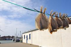 Dried fish (tørfisk) in the making, Hvide Sande, Denmark (nielsenjeanette449) Tags: denmark danmark outdoor udenfor hav ocean jylland jutland vesterhavet fish fisk tørfisk fisker fishermen
