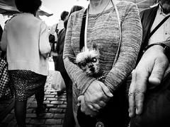 Blind dog (Vitor Pina) Tags: algarve fotografia photography portraits people pretoebranco portrait pessoas moments momentos monochrome contrast candid urban urbano rua street streetphotography scenes shadows streets