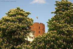 Gediminas' Tower (Natali Antonovich) Tags: lithuania vilnius nature enamouredspring spring landscape famousvilnius blossom gediminastower castle history oldtown oldworld oldest oldtime harmony