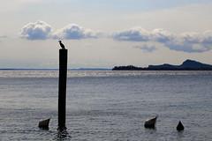 On A Pole (orkomedix) Tags: lake garda italy season water sky canon 6d 24105l outdoor