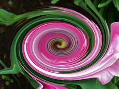Twirl 30 (PhotosbyJim) Tags: twirl patterns