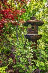 red maple lantern (JoelDeluxe) Tags: albuquerque biopark botanical garden nm newmexico joeldeluxe