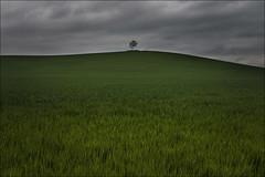Solitario (Jose Cantorna) Tags: árbol tree soledad solitario campo verde serenidad cielo sky nikon d610