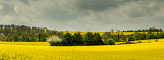 Yellow Mellow - In Explore (Steed171) Tags: landscape yellow fields countryside farmland canoneos700d