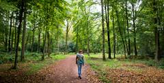 Walking (Gert Brink) Tags: autumn trees bomen nikon herfst natuur 1750 groningen tamron bos braak eelde d7100
