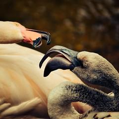 image (Eva O'Brien) Tags: nature animal animals zoo nikon cincinnati wildlife zooanimals cincinnatizoo d3100 nikond3100 evacares evaobrien