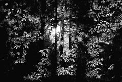 Hohemark - Forest
