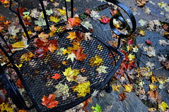 chair, leaves (Erik's pictures) Tags: autumn fall leaves chair