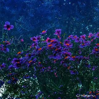 Giardino... Garden...