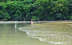 floresta e mar (Ruby Ferreira ) Tags: sea reflection mar rainforest waves reflexos mataatlntica bertiogasp litoralnortepaulista brasilemimagens