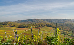 A Place with a View. (andreasheinrich) Tags: autumn berg germany deutschland nikon path hill herbst vineyards weinberge forrests southgermany wälder neckarsulm d7000