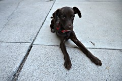 Now Is Found (Pedestrian Photographer) Tags: nov november dog brown feet puppy lost long sunday sidewalk driveway stray paws cracks ribbet 2014 dsc6545 dsc6545b