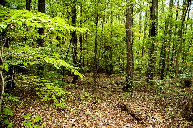 Selma Steele Nature Preserve - October 6, 2014