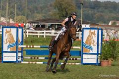 DSC06298_s (AndiP66) Tags: horse oktober macro sports sport schweiz switzerland mark sony luzern sp ii di if alpha tamron concours 77 pferd 70200 equestrian derby f28 ld horsejumping 70200mm wettbewerb 2014 springen eschenbach kantonsolothurn inwil reithof springreiten cantonsolothurn stleodegar wolhusen andreaspeters pferdespringen grueb martinameyer 77m2 a77ii ilca77m2 77ii slta77ii