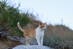 The cat out of the castle on Pigeon Island (Florian  v18) Tags: travel cute cat canon turkey tour 旅游 猫 风景 动物 佳能 土耳其 24105mm 5d3 5dmarkiii